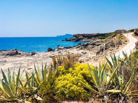 dodecanese: Coastal vegetation near kalithea Rhodes  Dodecanese Greece Europe Stock Photo