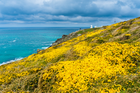 Flowering Gorse on the headland know as Pendeen Watch in the background is Pendeen Lighthouse Cornwall England UK Europe