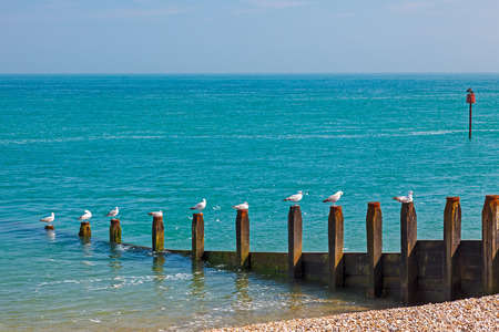 Row of Seagulls on a timber groyne Selsey Bill Beach West Sussex England UK Europe