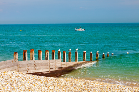 selsey: Row of Seagulls on a timber groyne Selsey Bill Beach West Sussex England UK Europe