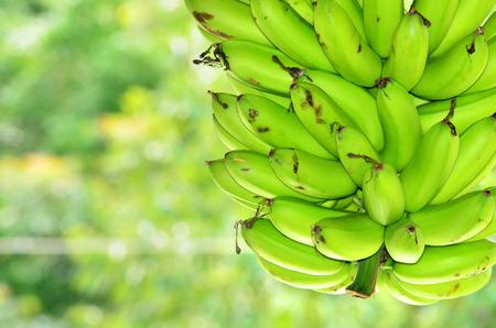 banana: banana