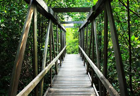 mangrove: Bridge in mangrove