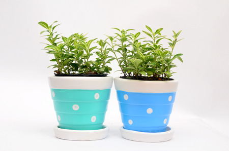 Ornamental plants in Flowerpot with copy space for text