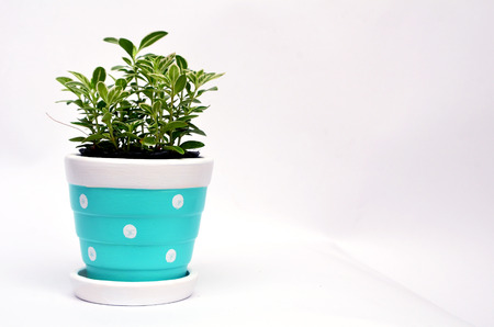 Ornamental plants in Flowerpot with copy space for text Stock Photo