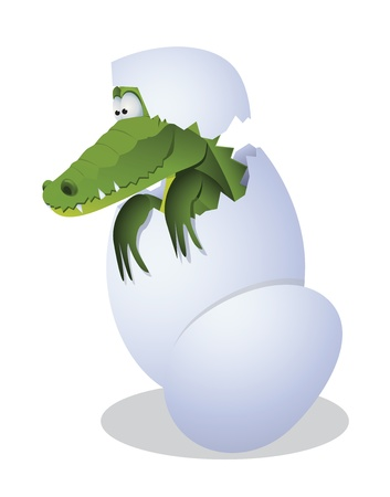 hatched: Funny crocodile hatched from eggs