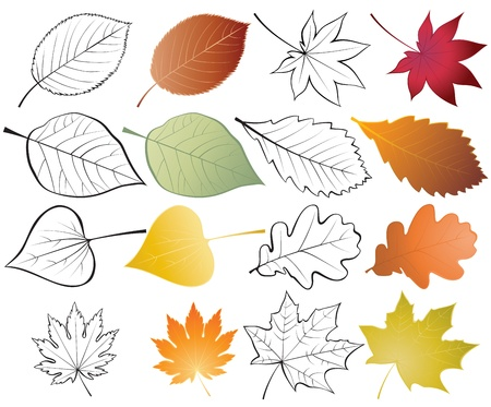 maple leaf icon: Set of leaves. Color and outline illustrations
