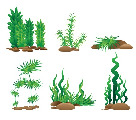 grass silhouette: Set of grass - vector collection Illustration