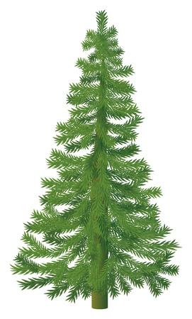 arbre     ? � feuillage persistant: Christmass arbre sur fond blanc