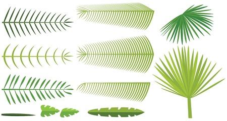 palm computer: Set of palm leaves Illustration