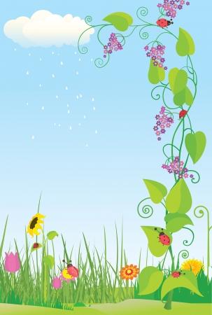 non urban scene: Flower meadow with ladybugs