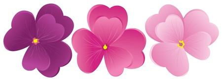 petals: Violet flower