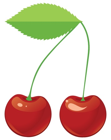 Two red ripe cherries on a shank  Illustration