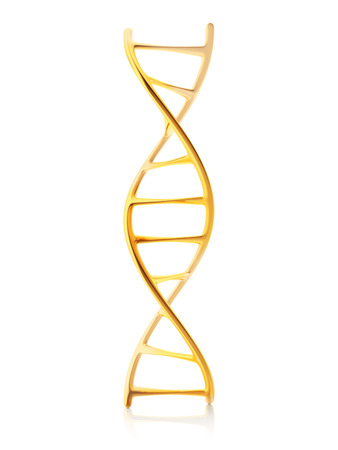 nucleotide: gold standard of fragment of human DNA molecule, 3d illustration isolated on white background