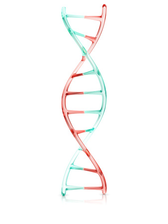 nucleotide: fragment of human DNA molecule, 3d illustration isolated on white background