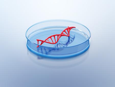 La estructura del ADN en la placa de Petri. Ilustración 3D. Foto de archivo - 69630543