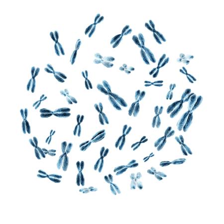 Set van 46 menselijke chromosomen geïsoleerd op een witte achtergrond. 3D illustratie Stockfoto