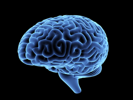 Magnetic resonance image of the human brain. 3D illustration. Stock Photo
