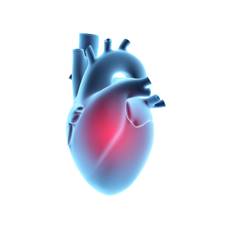 X-ray image of human heart with pain center, isolated on white background. 3D illustration.