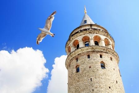gaviota: Torre de Gálata