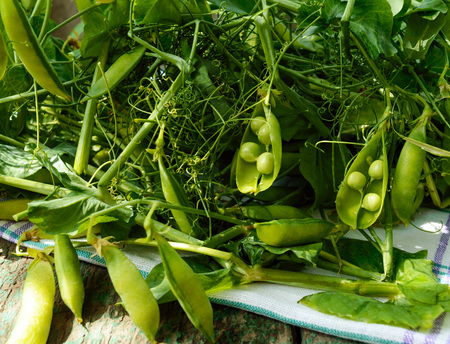 picked: Green freshly picked pea pods and stems. Stock Photo