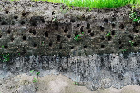 burrows: House steppe birds - holes in the steep bank of the river