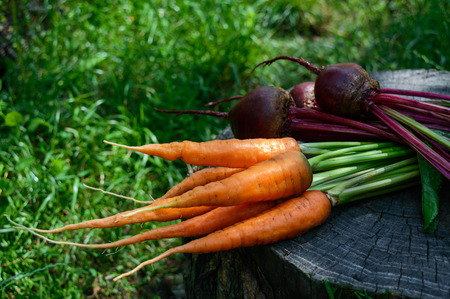Freshly carrots and beets on an old tree stump. . Stock Photo