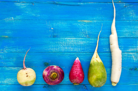 Several kinds of radish (daikon, Chinese red, green) on a blue (sapphire) wooden background. Useful vitamins ingredient for salads. The top view. Space for your text.