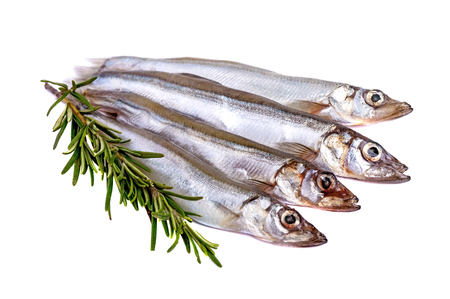 Raw fish capelin and a branch of rosemary isolated on white background.