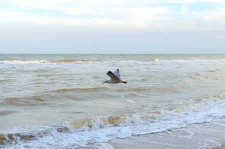 Seagull over the sea. A free seabird hovers over the waves. Archivio Fotografico