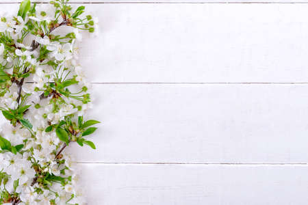 Blossoming branches with young leaves on a white wooden background, with copy space. Spring background Stock Photo