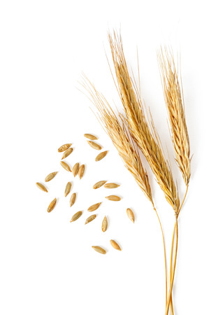 spikelets: spikelets and grains of wheat on a white background