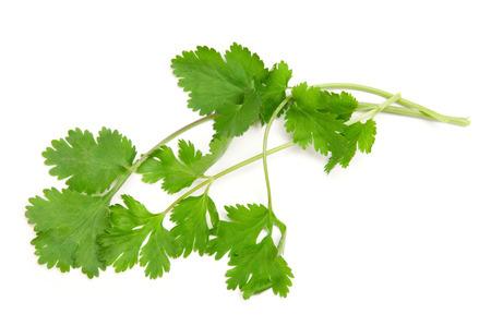 cilantro: cilantro sobre un fondo blanco