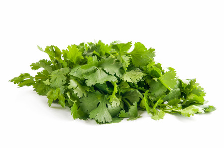 culantro: cilantro sobre un fondo blanco
