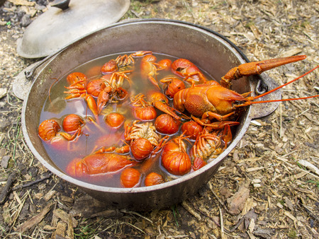 cancers: Boiled cancers in a cauldron on a picnic