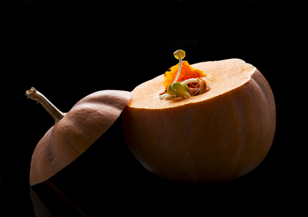 pumpkin with germinating pips on a black background