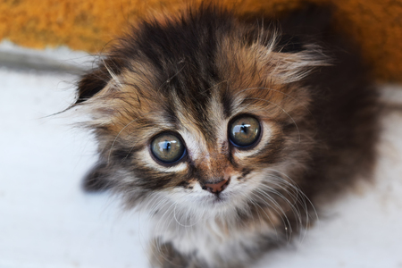 curiously: animal kitten with big eyes curiously looking Stock Photo