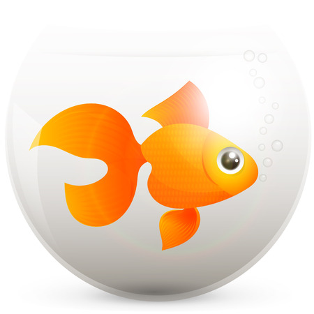 gold fish bowl: lonely goldfish in a fishbowl