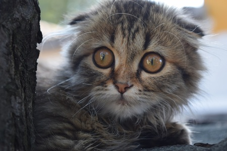 Beautiful cat with big eyes on the street
