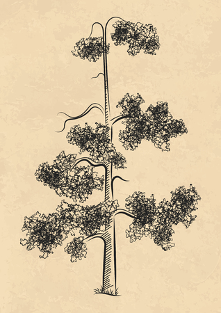 Nature design elements, pine trees vector illustration