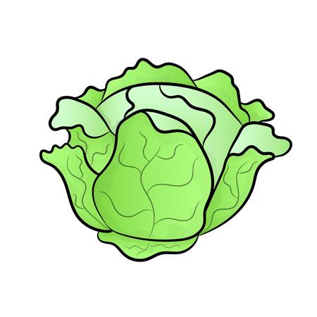 Vector verde liner col. Imágenes Prediseñadas de col. Vector vegetal