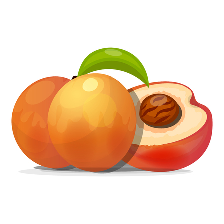 Ripe peaches, whole and slices. Vector illustration. On white background  イラスト・ベクター素材