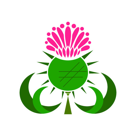 Thistle Medicinal Plant Vector Illustration On White Background