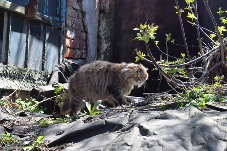 Cat Sitting On The Ruins Of An Abandoned House. Cat Basking In The Spring Sun