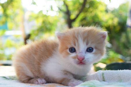 Słodki puszysty kotek patrzy na świat