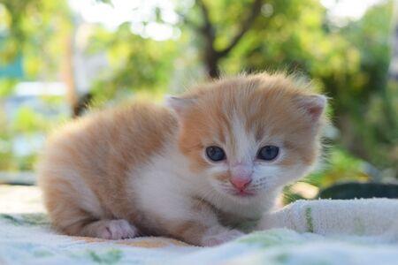 Cute Fluffy Kitten Looks At The World Around