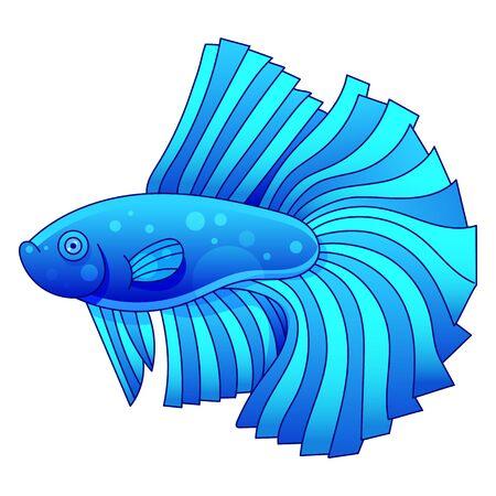 Aquarium Fish Cockerel Vector Illustration For Kids And Adults