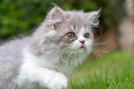 Cute Kitten play on grass in the garden