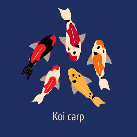 illustration of five koi fish carps of different colors floating in the water. multi-colored carps Illustration