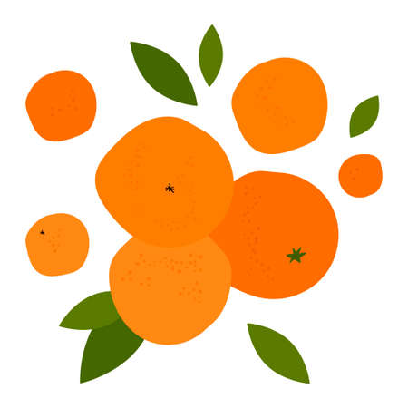 illustration with bright orange citruses. ripe oranges, tangerines and leaves. modern abstract design for packaging, print for clothes, fabric