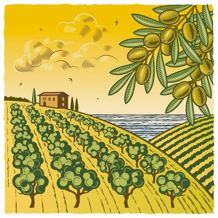 tree in field: Landscape with olive grove Illustration